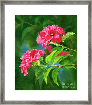 Two Hibiscus Rosa Sinensis Blossoms With Background Framed Print