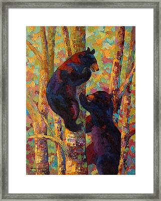Two High - Black Bear Cubs Framed Print by Marion Rose
