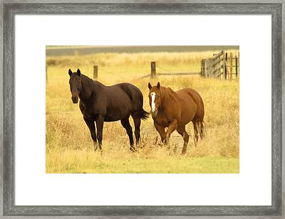 Two Horses In A Field Framed Print