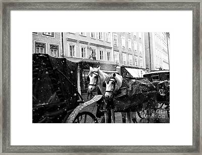Two Horses In Salzburg Framed Print by John Rizzuto