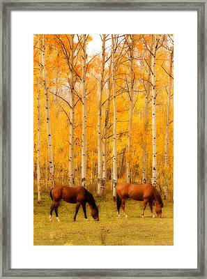 Two Horses In The Autumn Colors Framed Print by James BO  Insogna