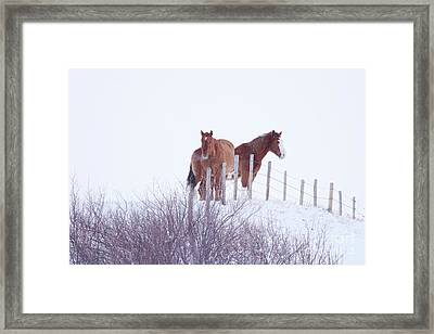 Two Horses In The Snow Framed Print