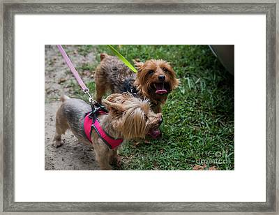 Two Hot Dogs 11582 Framed Print by Doug Berry