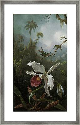 Two Hummingbirds Above A White Orchid Framed Print by Martin Johnson Heade