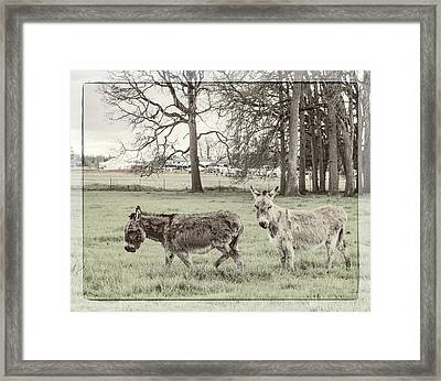 Two Jack Asses Framed Print by Jean Noren