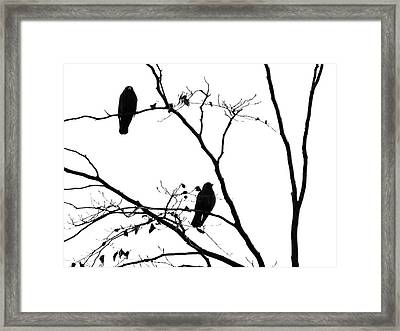 Two Jackdaws - Waiting Framed Print