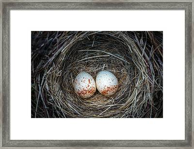 Framed Print featuring the photograph Two Junco Eggs In The Nest by William Lee