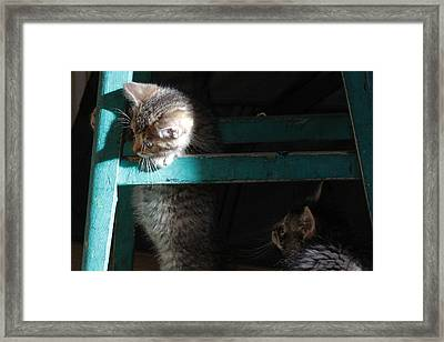 Framed Print featuring the photograph Two Kittens With Turquoise Chair by Doris Potter