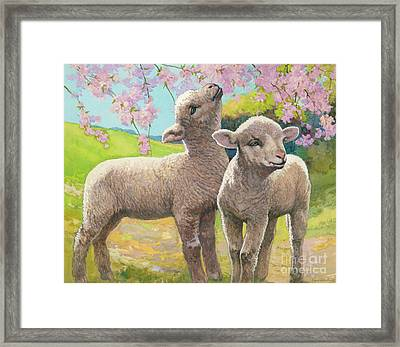 Two Lambs Eating Blossom Framed Print