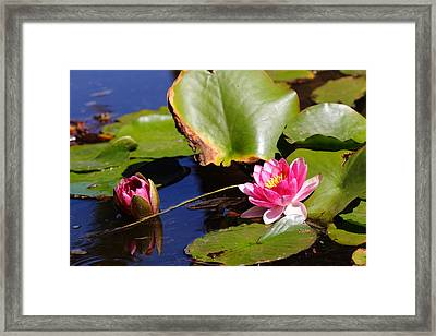 Framed Print featuring the photograph Two Lilies by Richard Patmore