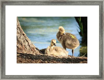 Two Little Goslings Framed Print