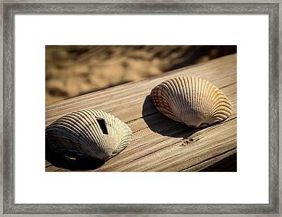 Two Little Shells Framed Print