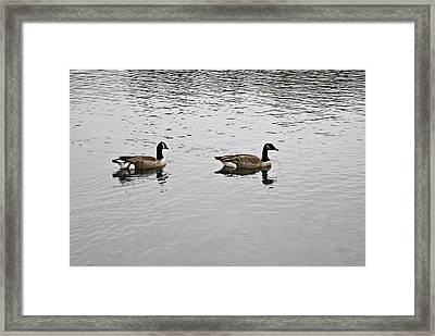 Two Lovely Canadian Geese Framed Print by Douglas Barnett