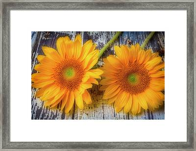 Two Lovely Sunflowers Framed Print by Garry Gay