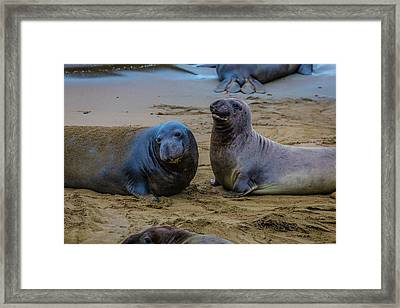 Two Male Elephant Seals Framed Print by Garry Gay