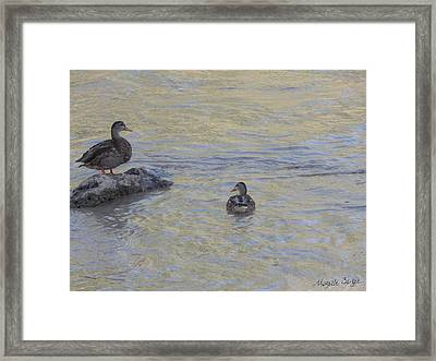 Two Mallard Ducks Framed Print