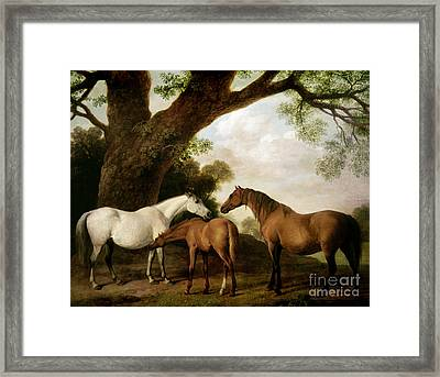 Two Mares And A Foal Framed Print