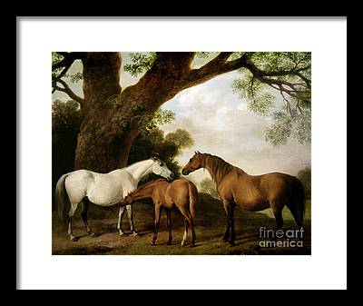 Brown Horse Framed Prints