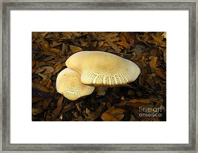 Two Mushrooms Framed Print by David Lee Thompson
