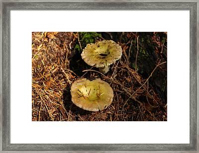 Two Mushrooms Framed Print by Jeff Swan