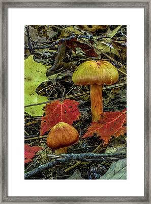 Two Mushrooms Framed Print