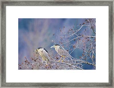Two Night Herons Framed Print by Jeff Swan