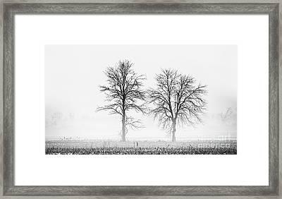 Two... Framed Print by Nina Stavlund