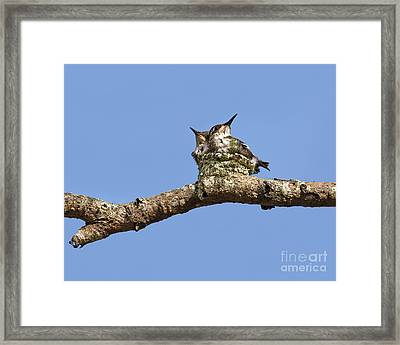 Two Of A Kind... Framed Print by Nina Stavlund
