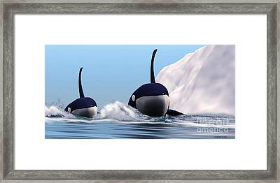 Two Orca Whales Framed Print by Corey Ford