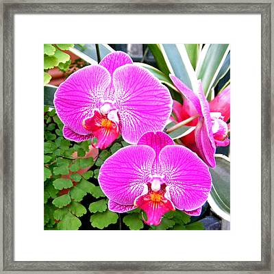 Two Orchids Framed Print