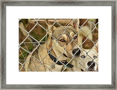 Two Pals Framed Print