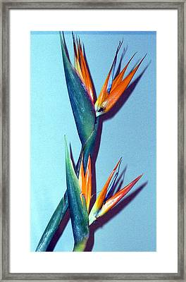 Two Paradises Framed Print by Mindy Newman