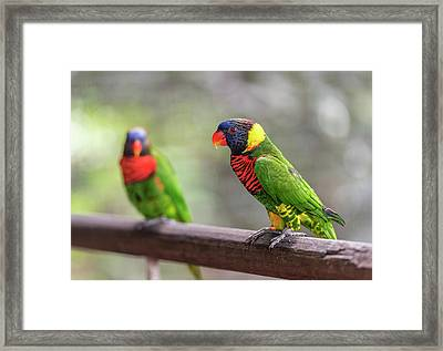 Two Parrots Framed Print