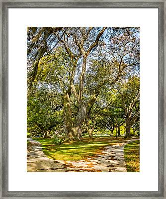 Two Paths Diverged In A Live Oak Wood 2 Framed Print