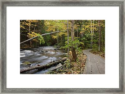 Two Paths Framed Print by Karol Livote