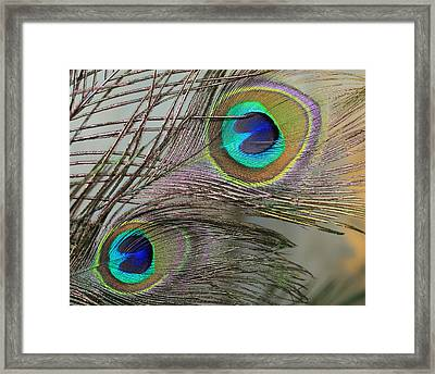 Two Peacock Feathers Framed Print