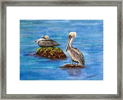 Two Pelicans Framed Print by Suzanne Krueger