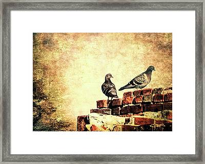 Two Pigeons Framed Print