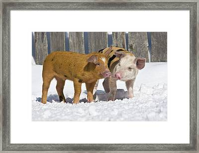 Two Piglets Framed Print by Jean-Louis Klein & Marie-Luce Hubert