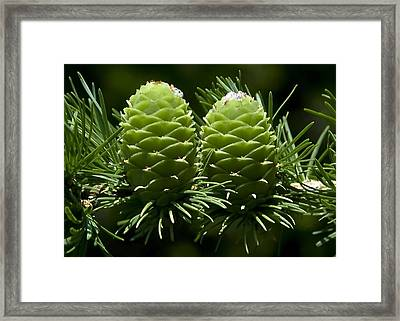 Two Pinecones Framed Print by Svetlana Sewell
