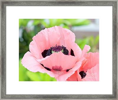Two Pink Poppies Framed Print