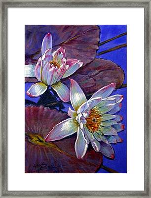 Two Pink Water Lilies Framed Print by John Lautermilch