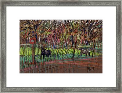 Two Ponies Framed Print by Donald Maier