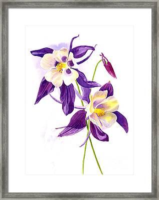 Two Purple Columbine Flowers Framed Print by Sharon Freeman