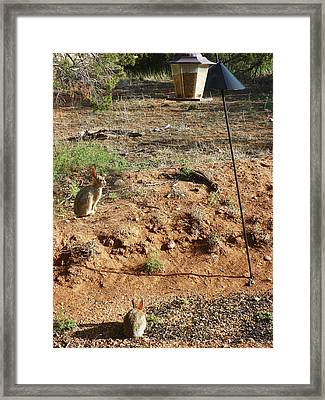 Two Rabbits And Bird Feeder Framed Print by Joseph Frank Baraba