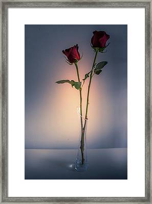 Two Red Roses Framed Print by Art Spectrum