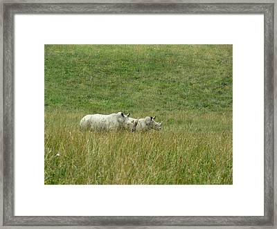 Two Rhino In The Grass Framed Print by George Jones