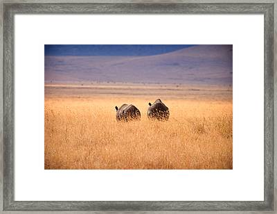 Two Rhino's Framed Print by Adam Romanowicz