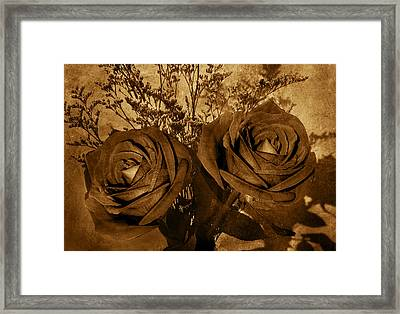 Two Roses Framed Print