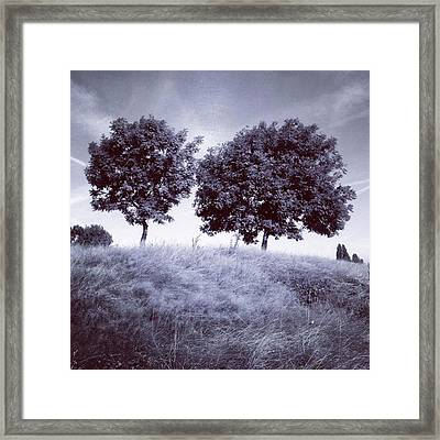 Two Rowans The Cloddies, Nuneaton Framed Print